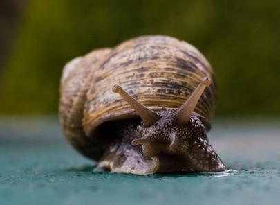 Come inviare gratis Snail Mail