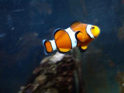Come faccio a trovare Nemo PC Games scaricare?