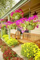 Come acquistare il software da giardino-Design Paesaggio per uso domestico