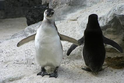 Come imparare Linux in linea