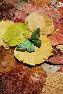 Come creare una farfalla in Illustrator Utilizzando base Forme
