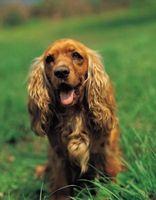 Come ottenere Facebook Dog Lover Amici