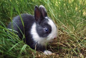 Come disegnare un coniglio in linea