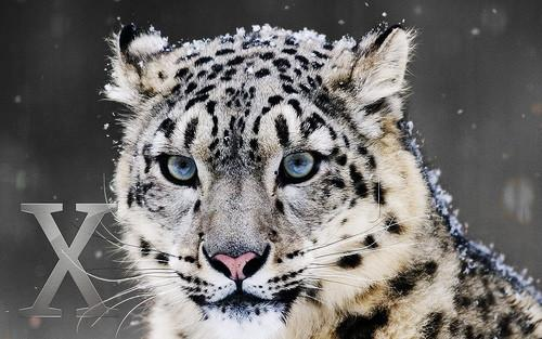 Manutenzione OS X Snow Leopard