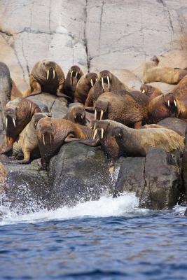 "Animali in ""Zoo Tycoon 2: Marine Mania!"""