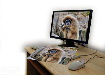 Come recuperare le foto via un azionamento difettoso