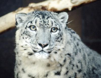 Come utilizzare attività ricorrenti su Snow Leopard