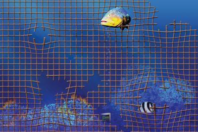Come progettare il proprio programma acquario per il for Programma per progettare