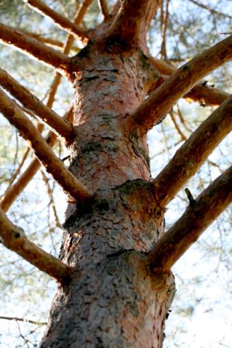 Come creare un diagramma ad albero in Word
