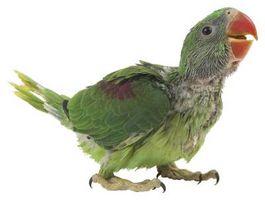 Come fare la testa di un uccello con Illustrator
