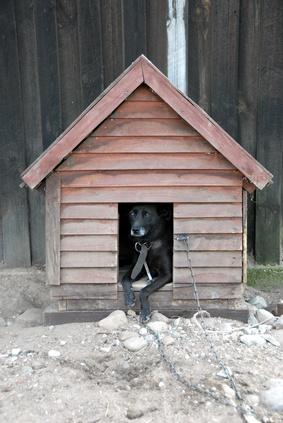 Come costruire una casa del cane sui Sims 2