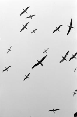 Come usare After Effects particelle giochi per creare uno stormo di uccelli
