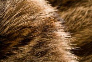 Come creare un avatar Furry