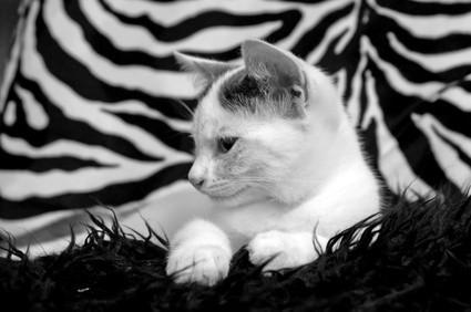 Come fare il vostro foto con il flash in bianco e nero