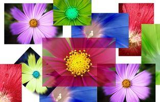 Tutorial per Dynamic Gallerie Fotografiche Flash con miniature