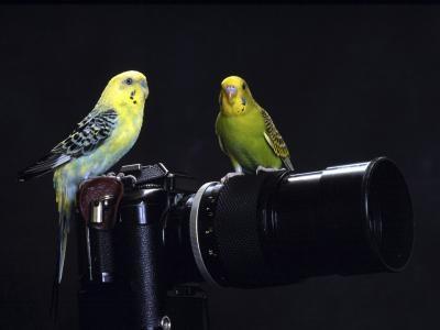 Come disattivare Kodak Ink Monitor