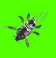 Come sbarazzarsi di un virus scarafaggio